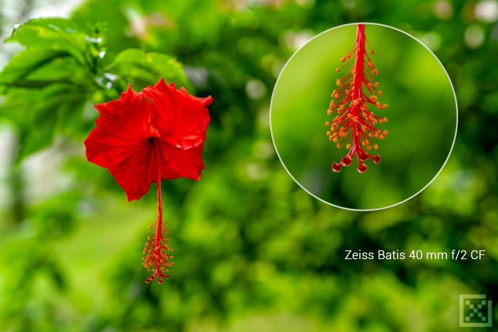 ZEISS Batis 2/40 CF Review 9